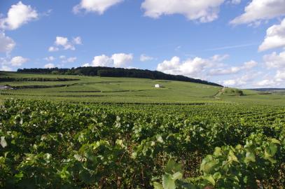 La Vallée de la Marne (Mont de Bonneil)